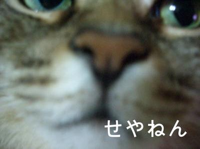 Kyon03
